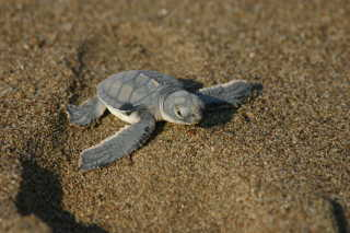 Baby Turtle Watching