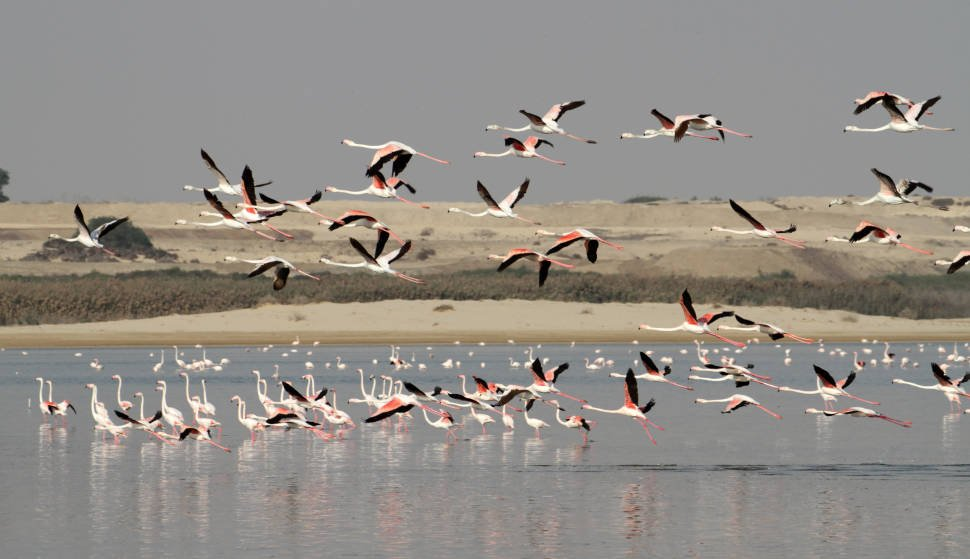 Best time for Greater Flamingos in Cyprus