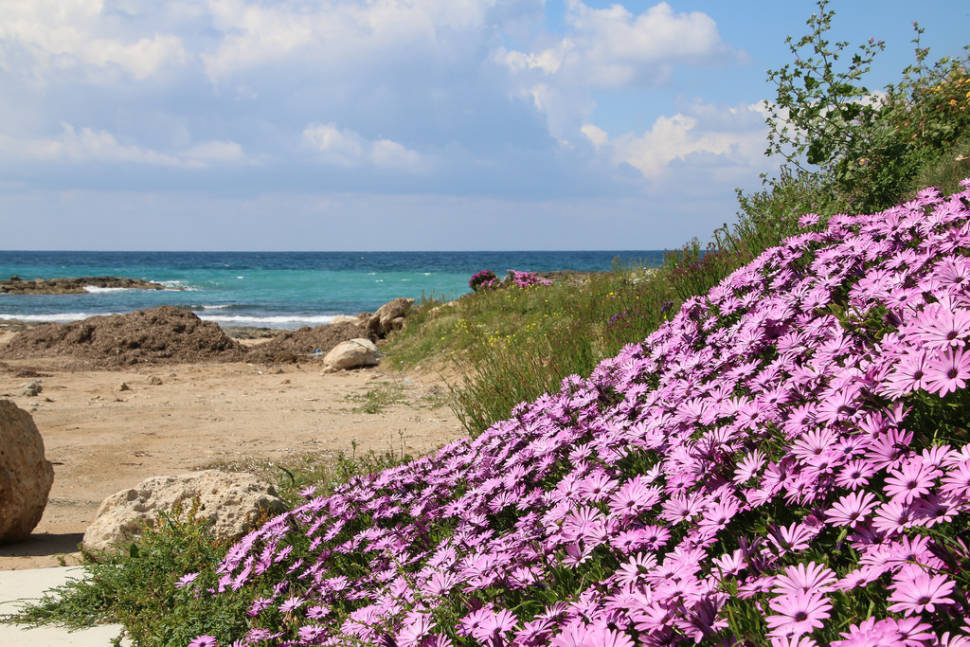 Spring in Cyprus - Best Time