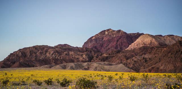 Death Valley Super Bloom in Death Valley - Best Season