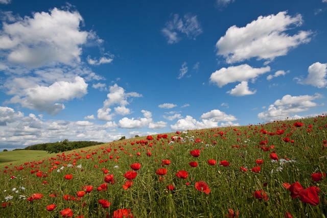 Best time for Blooming Fields in Denmark