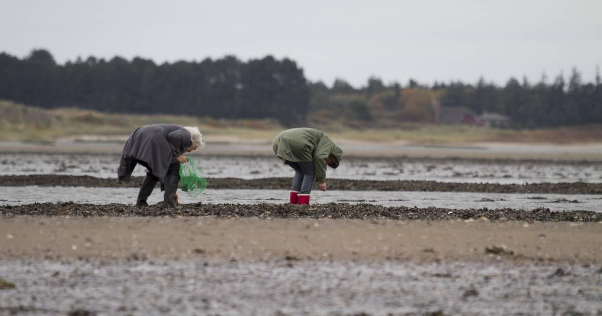 Oyster Safari in the Wadden Sea in Denmark - Best Time