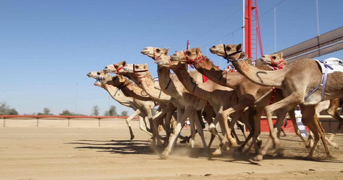 Al Marmoom Heritage Festival in Dubai - Best Time