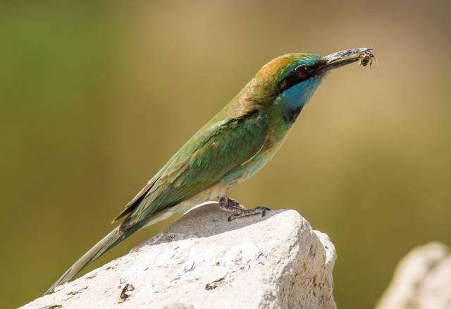 Birdwatching in Dubai - Best Time