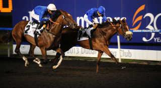 Domestic Horse Racing Season