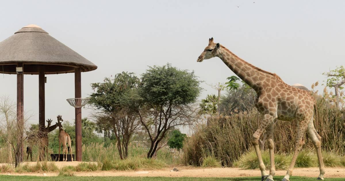 Dubai Safari Park in Dubai - Best Time
