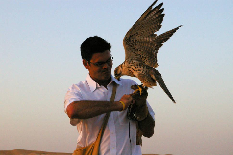 Falconry in Dubai - Best Season