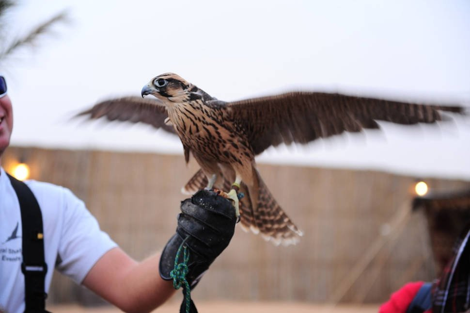 Falconry in Dubai - Best Time