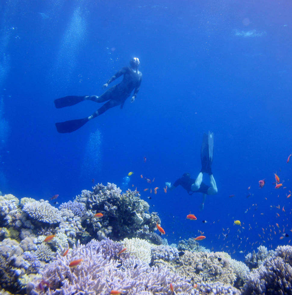 Corals of the Dahab Blue Hole
