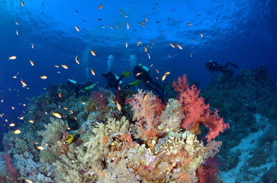 Scuba Diving and Snorkelling in Egypt - Best Time