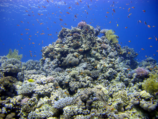 The Blue Hole - fish and coral reef saddle
