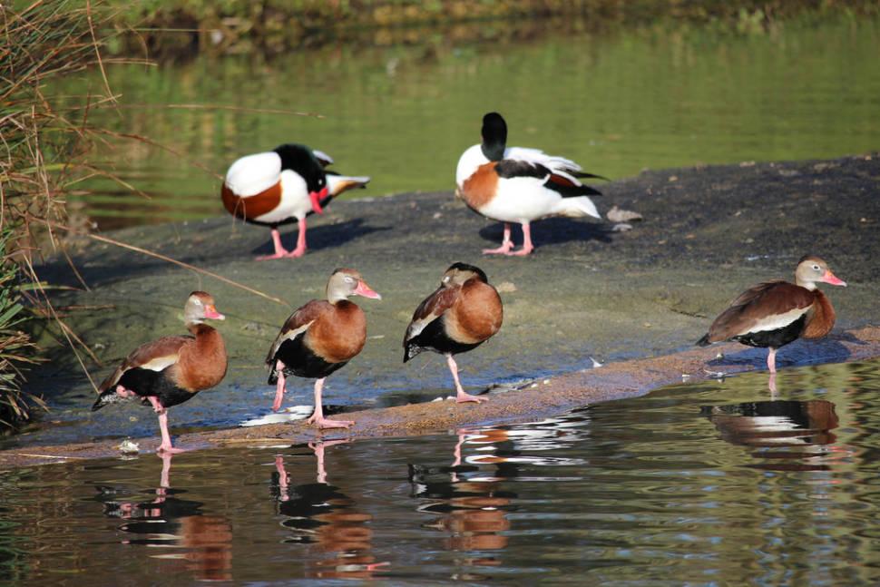 Birdwatching in England - Best Season