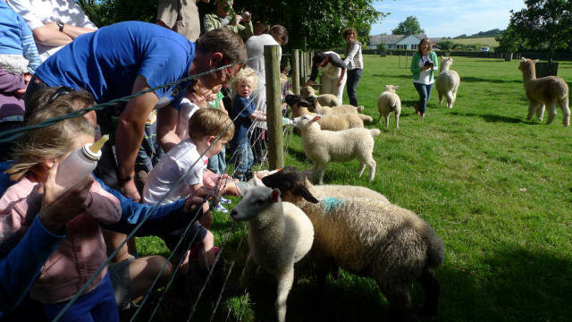 Best time for Lambing Season in England