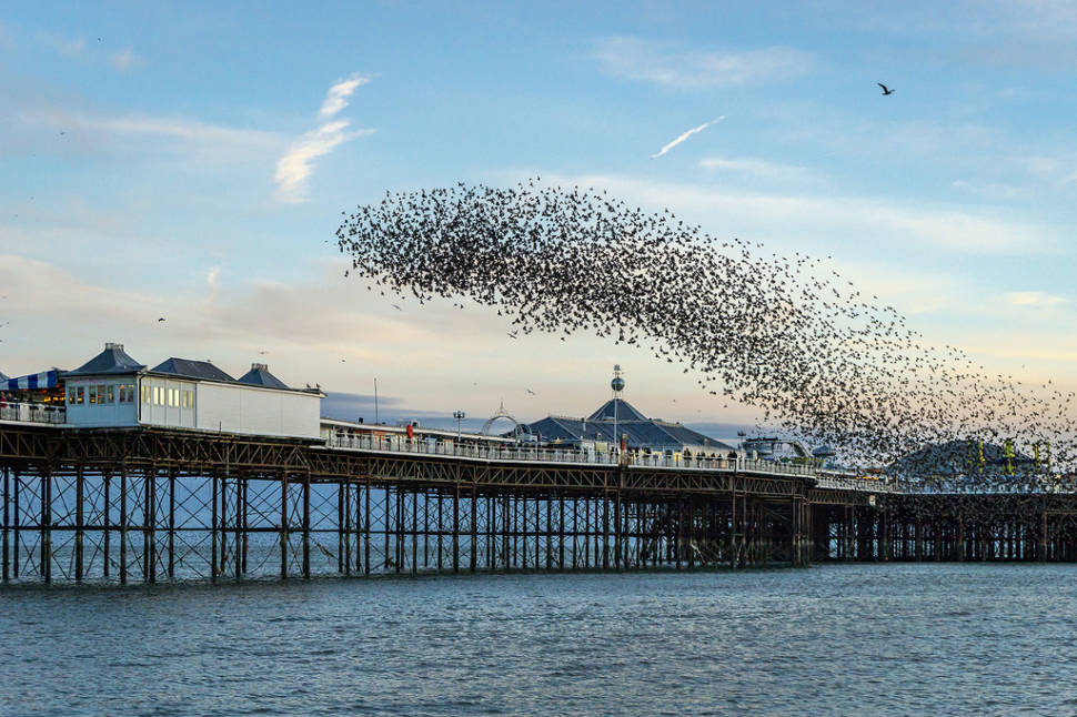 Starling Murmuration in England - Best Time
