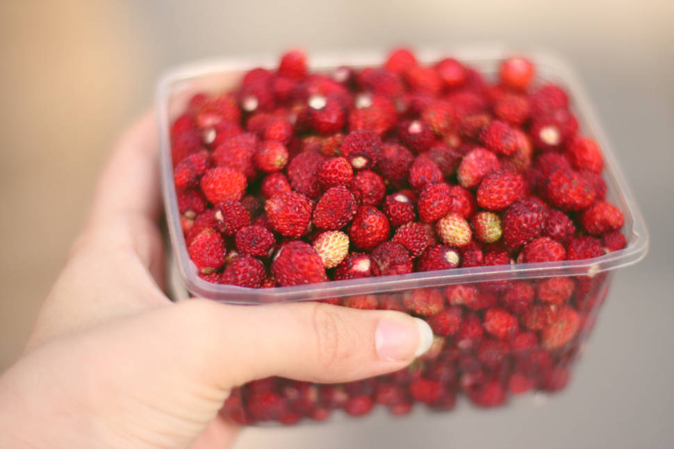 Best time to see Berry Picking in Estonia