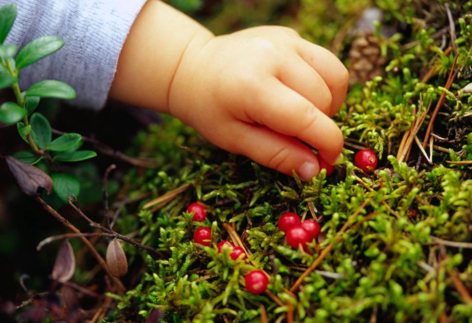 Berry Picking in Estonia - Best Season