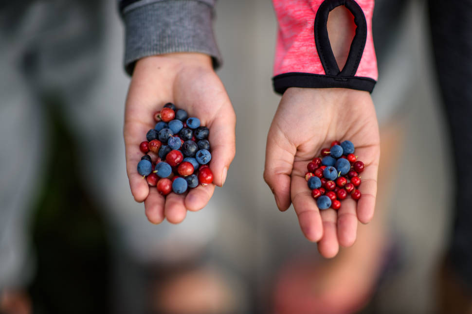 Berry Picking in Estonia - Best Time
