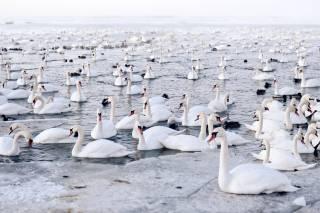 Birdwatching during Mass Bird Migration