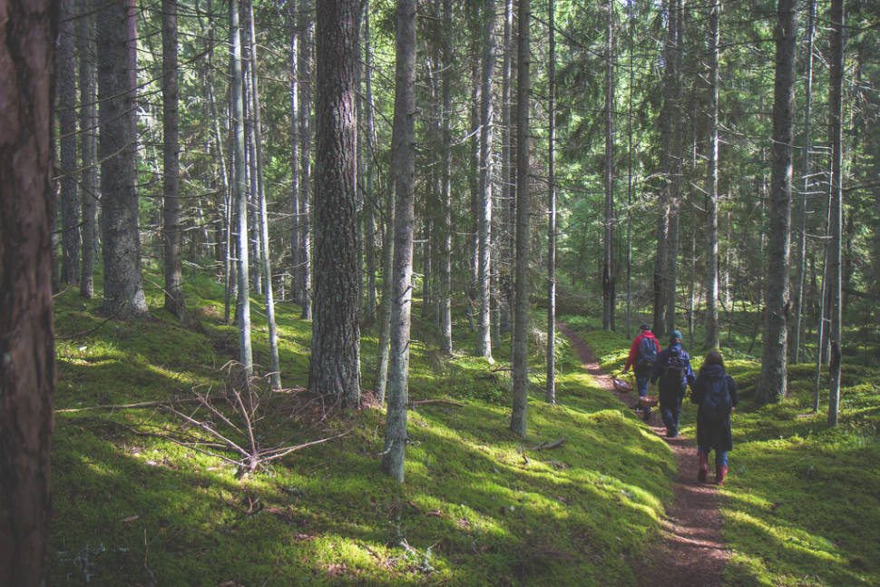 South-Estonia forest