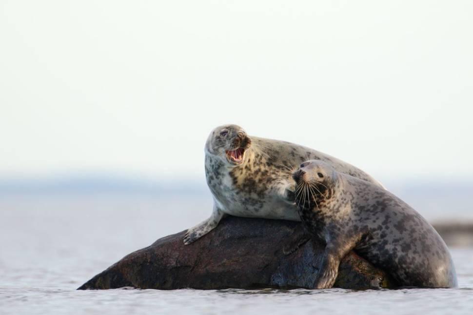 Seal Watching in Estonia - Best Time