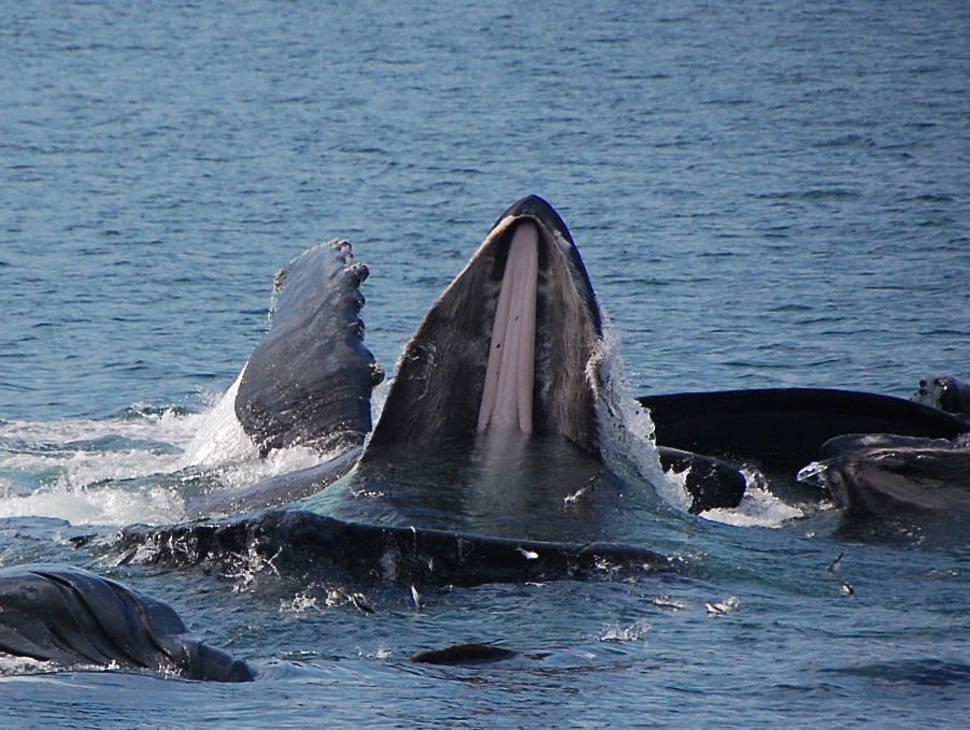 Best time for Humpback Whales in Fiji