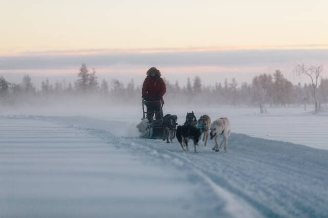 Best time to see Dog Sledding in Finland