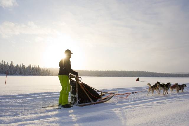 Dog Sledding in Finland - Best Time
