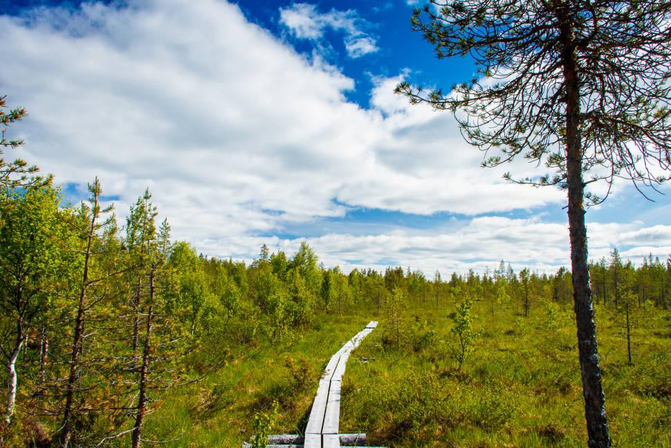 Hiking in Karhunkierros (Bear Trail)