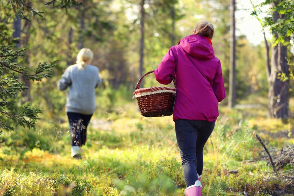 Kuusamo Folk Healers' Gathering in Finland - Best Season