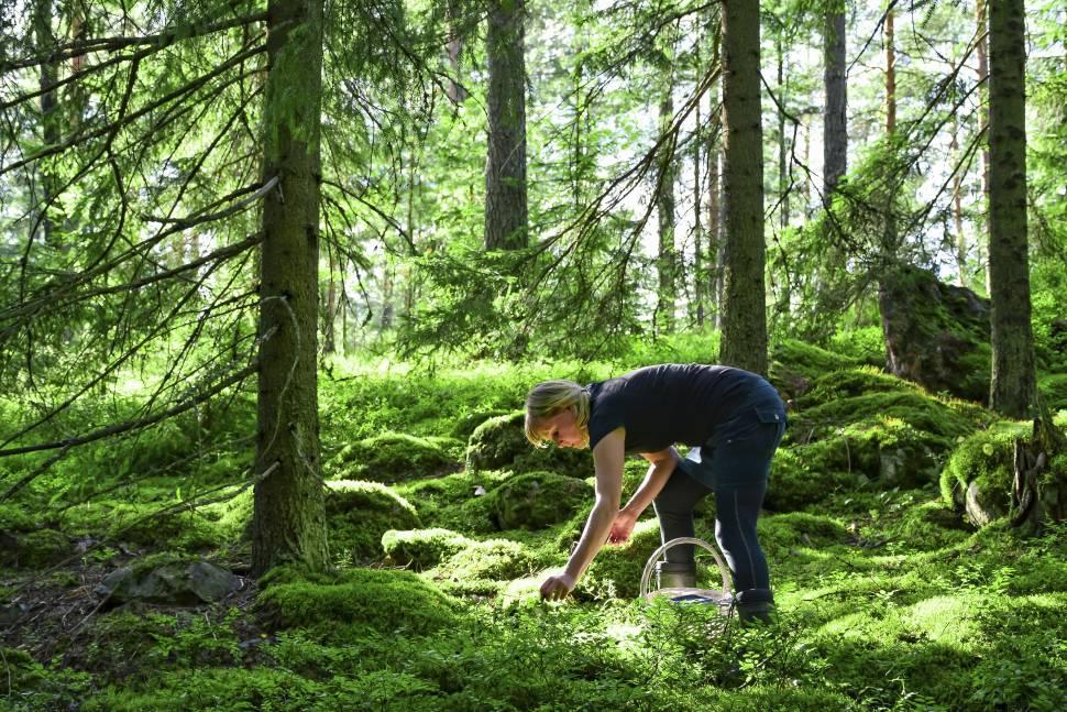 Wild Berry Season in Finland - Best Season