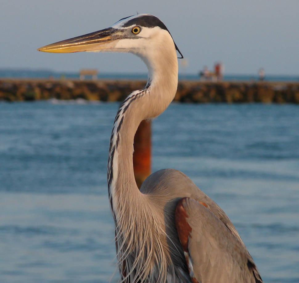 Birdwatching in Florence - Best Season