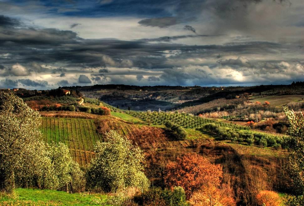 Grape Harvest in Florence - Best Season
