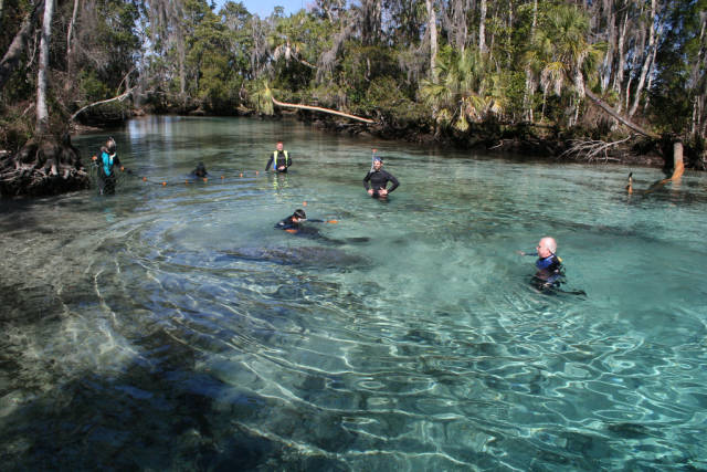 Best time to see Swimming with Manatees in Florida
