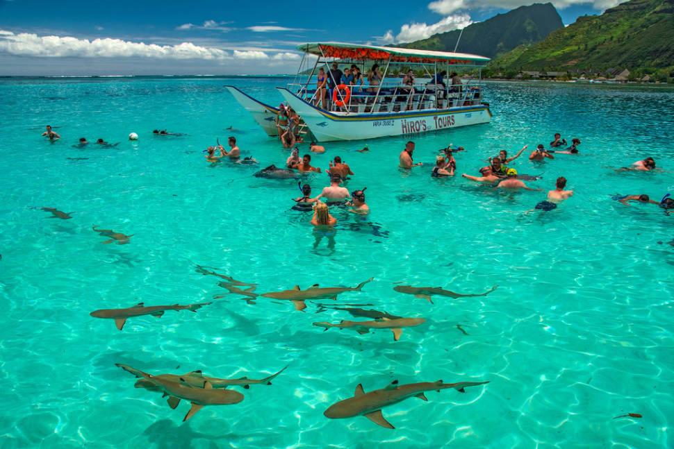 Shark Watching and Feeding in French Polynesia - Best Season