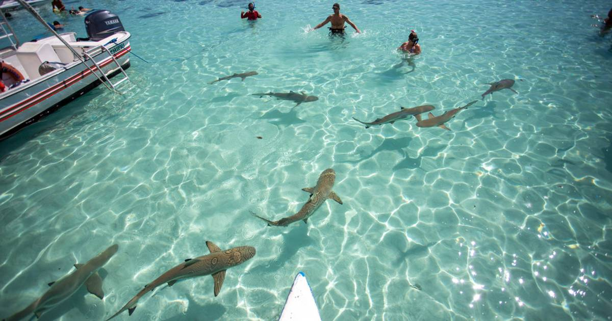 Shark Watching and Feeding in French Polynesia - Best Time