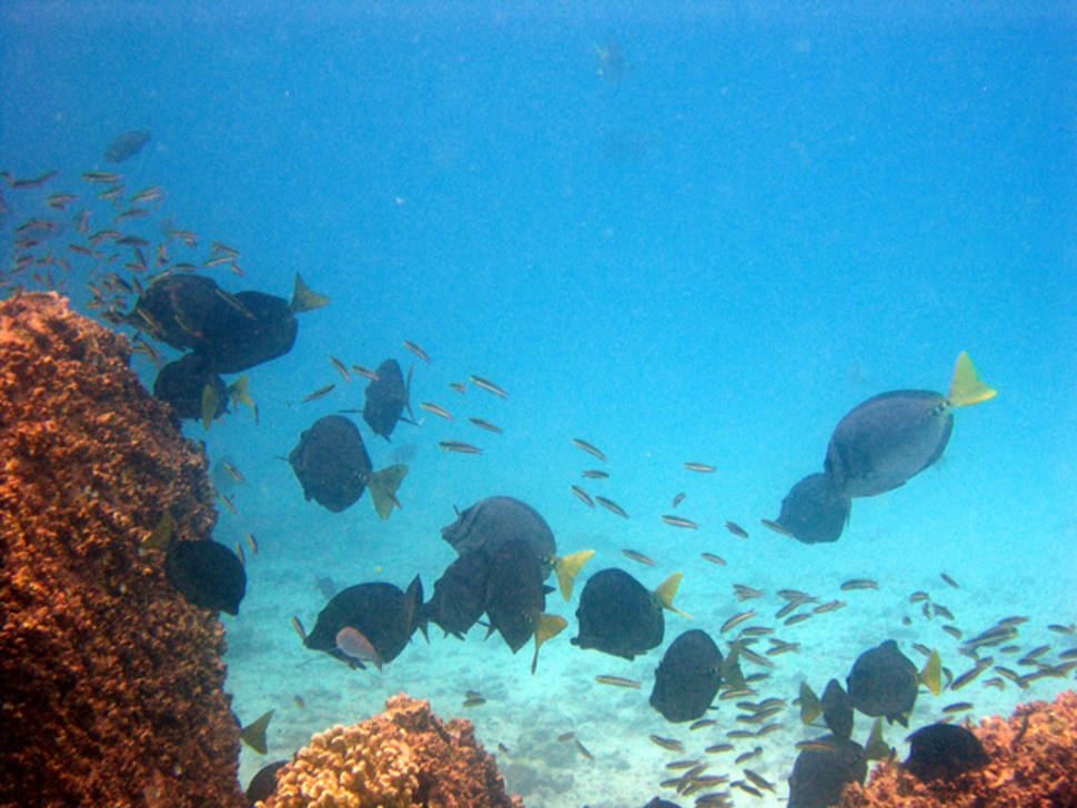 Best time for Best Diving Experience in Galapagos Islands