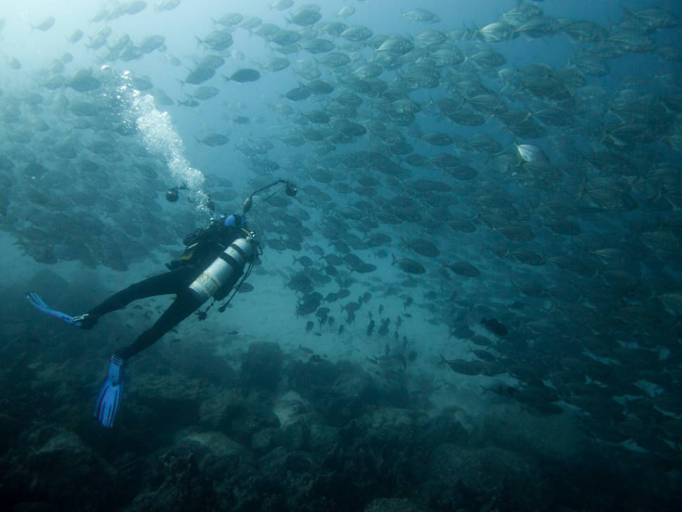 Best Diving Experience in Galapagos Islands - Best Time