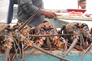 Lobsters Season