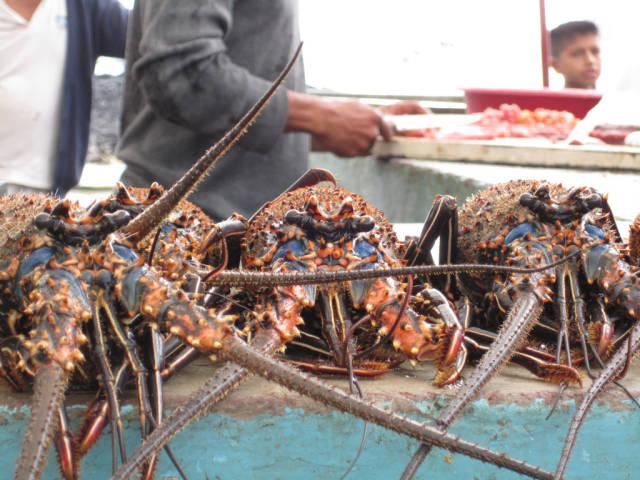 Lobsters Season in Galapagos Islands - Best Time