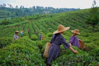 Georgian Tea Season