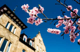 Almond Blossom Along the Wine Route