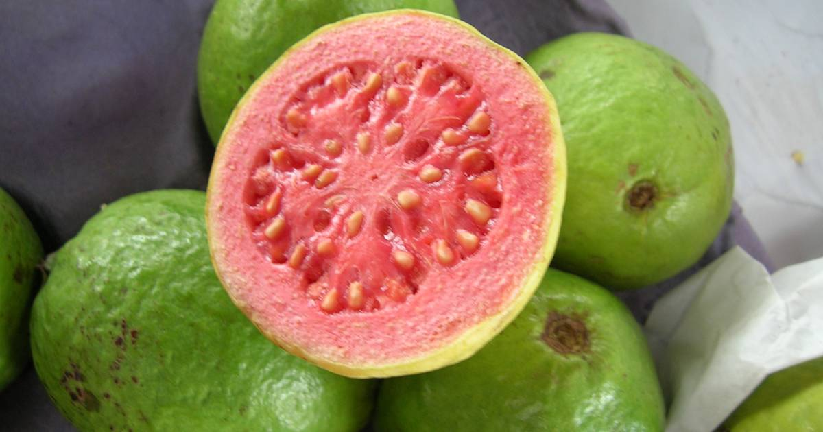Guava in Goa - Best Time