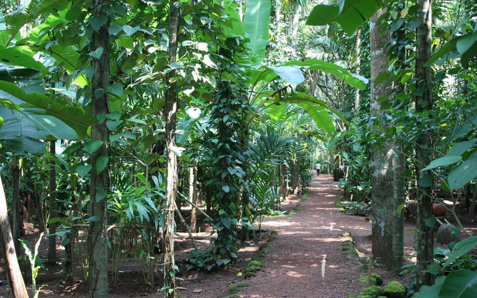 Spice garden on Tropical Spice Farm, Ponda