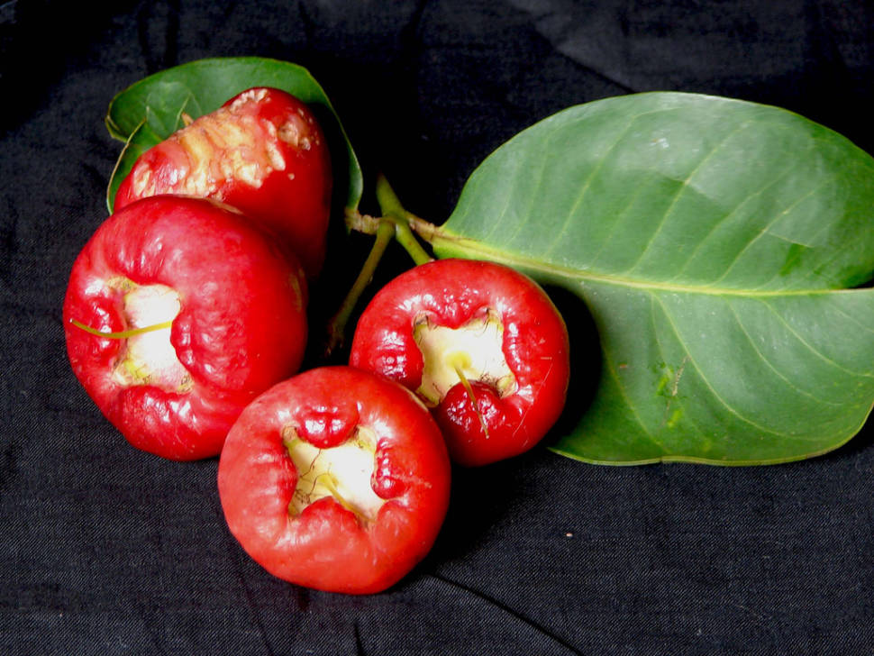 Water Rose Apple in Goa - Best Time