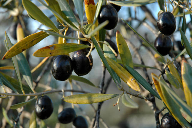 Olives and Olive Oil in Alhambra and Granada - Best Time