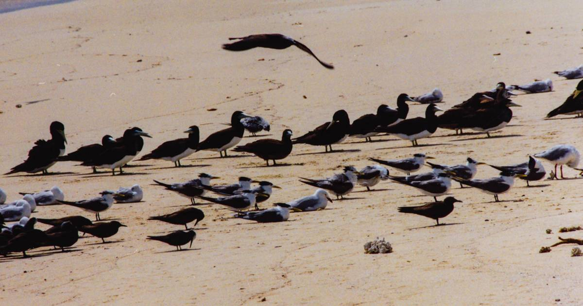 Breeding and Nesting Sea Birds in Great Barrier Reef - Best Time