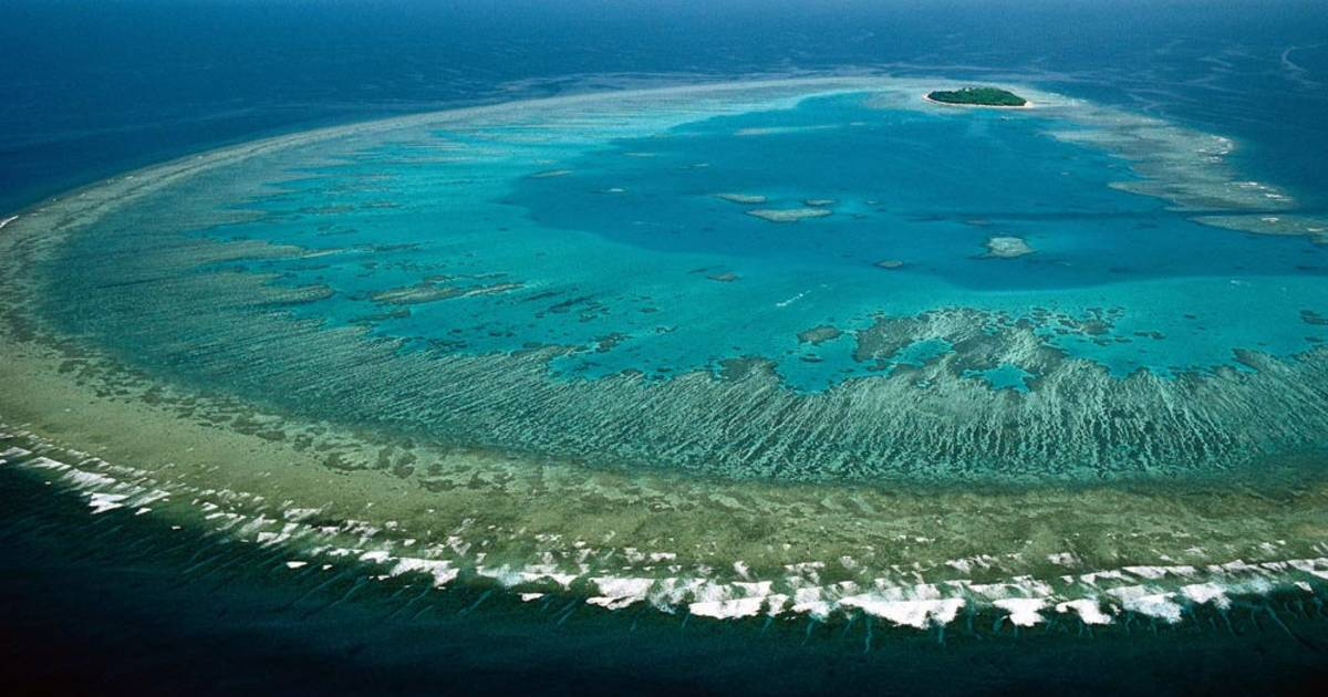 Coral Polyps Spawn in Great Barrier Reef - Best Time