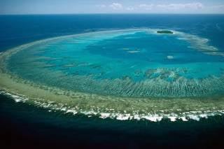 Coral Polyps Spawn