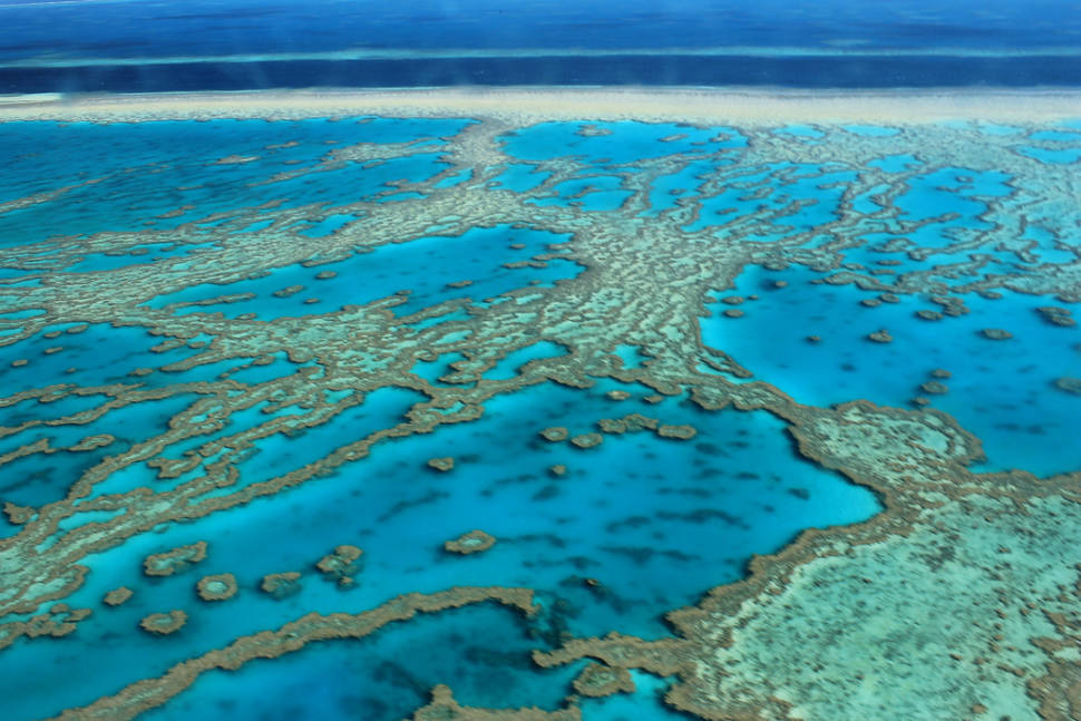 Coral Polyps Spawn in Great Barrier Reef - Best Season