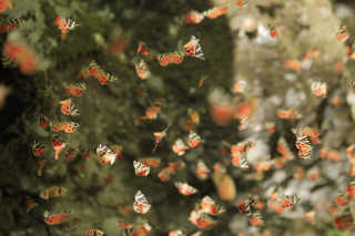 Valley of Butterflies in Rhodes
